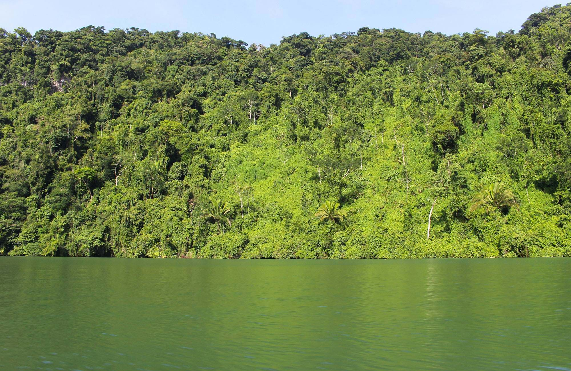 guatamala-jungle-by-the-river