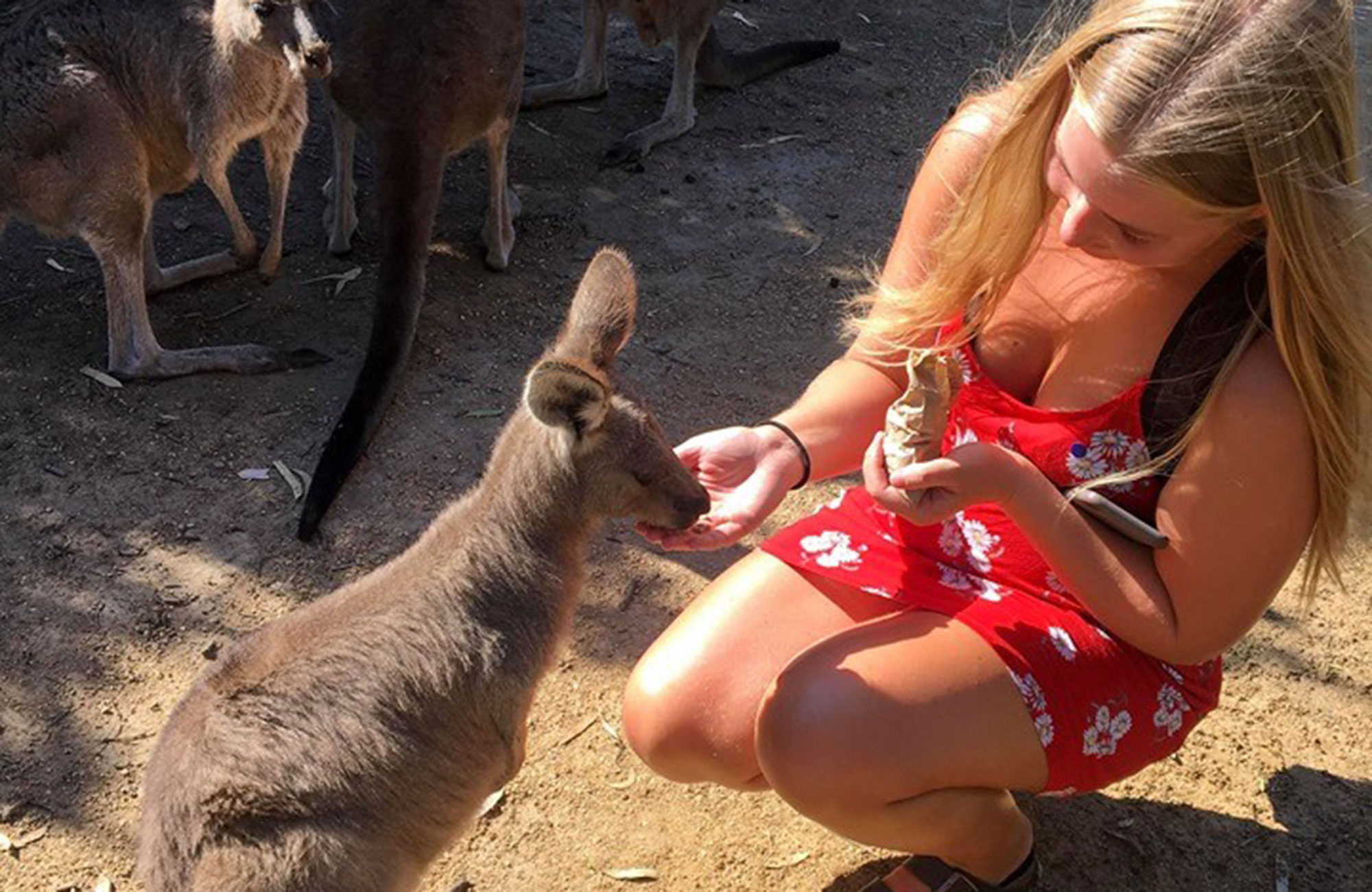 johanne student at university of south australia feeding kangaroos