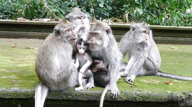 ubud_monkey_forest_1280x720_for_navi_web