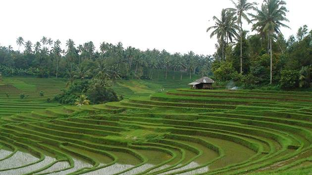ubud_-_rice_fields_1280x720_for_navi_web